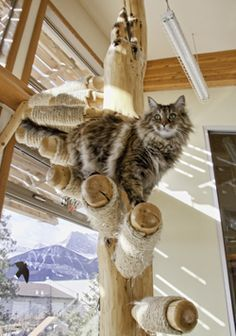 cat tree with sheep skin - Google Search
