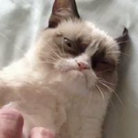 The Grumpiest Cat You've Ever Seen