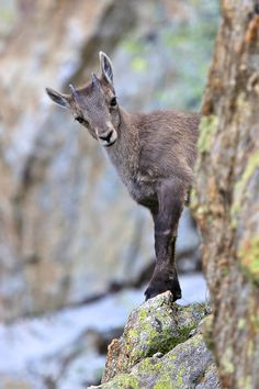 Europe Trotter is using the world's most passionate photo sharing community. Europe, Forest Fairy, France, Narnia, Mammals, Animal Pictures, Kangaroo, Goats, Cute Animals