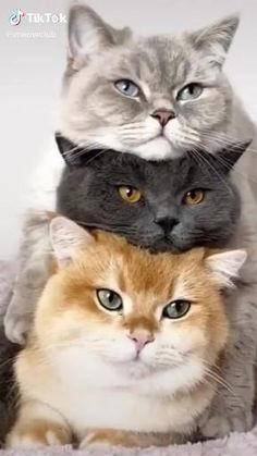 Cute Baby Cats, Cute Cats And Kittens, Cute Little Animals, Cute Funny Animals, Kittens Cutest, Funny Cats, Pics Of Kittens, Kitty Cats, Cute Animal Videos