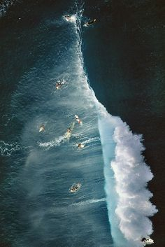 If you just look at the shapes of the surfers and their boards, you can kind of see why they could resemble seals to a . . . .