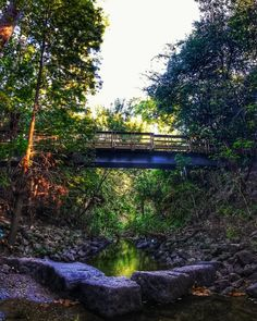 Houston's Hidden Forest Lies In The Middle Of The City With Tree Tunnels - Narcity Wooden Pathway, Tree Tunnel, Houston City, Hiking Spots, Kinds Of Birds, Magical Forest, Happy Trails, City Limits, Travel Goals
