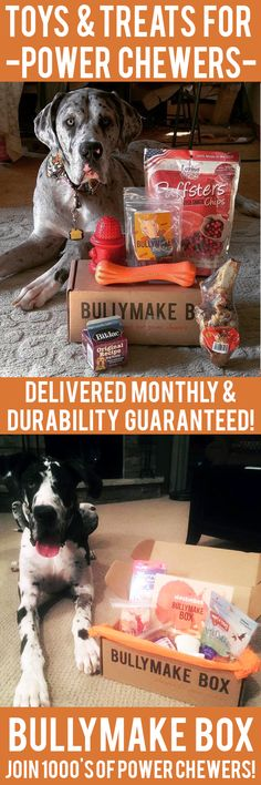 Is your dog a POWER CHEWER? Get DURABLE toys and DELICIOUS treats delivered monthly! All toys guaranteed 14 days or we replace them for free. See here: https://bullymake.com/?utm_source=pinterest&utm_medium=pinterest-ads&utm_term=gd-jan10&utm_content=gd-jan10