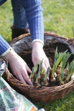 Na de winter verdient de tuin aandacht. Start in maart met het planten van planten, maar vergeet ook het onderhoud niet. Lees meer in de tuinkalender.