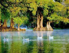 EstiloDF » Adéntrate en la belleza michoacana del Lago Camécuaro