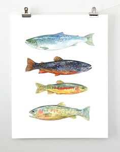 Fish watercolor print - david scheirer watercolors  #trout