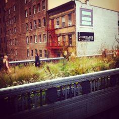 Walking #highline #autumn #manhattan #ny #nyc