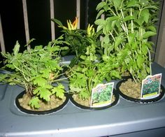 Hydroponics - at Home and for Beginners http://www.instructables.com/id/Hydroponics---at-Home-and-for-Beginners/
