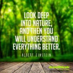 Look deep into nature, and then you will understand everything better. — Albert Einstein #quote #nature