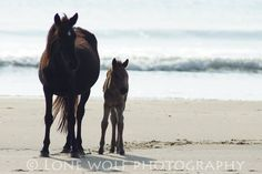 Mother and Child - Wild Horses