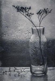 Фотограф Svoboda - тёмная *