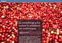 La canneberge et la résistance aux antibiotiques - La Presse+ Troubles Digestifs, Antimicrobial Resistance, Natural Selection, Food Security, Urinary Tract Infection