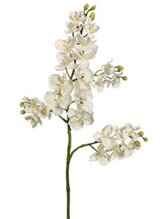 "28inch Baby Phalaenopsis Orchid in Cream | 20 mini blooms 1.5"" $7"