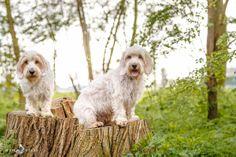 My dogs Déesse de la Forêt