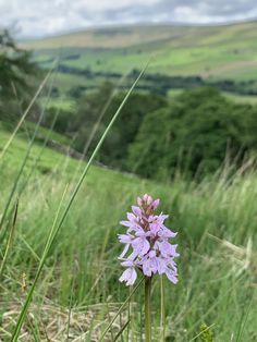 Heath Spotted Orchid in our meadows overlooking the South Tyne valley here at Williamston Barns. #Williamstonbarns #NorthPennines #NorthPennAONB #northumberland #visitnorthumberland #familyholiday #slaggyford Luxury Holiday Cottages, Holiday Accommodation, Luxury Holidays, Barns, Wilderness, Orchids, Natural Beauty, Nature, Flowers