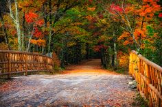 Autumn Road by Jeff Sinon #autumn #road #landscape