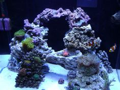 Possible aquascape for the new cube