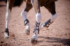Hooves are to horses as foundations are to houses—they're the base that everything else is built upon. And just like your house's foundation, your horse's hooves need to be strong, solid and reliable. But you probably knew that already. What you might not know is what you can do to support healthy hoof growth. That's where we come in! We've got supplement solutions to nourish hooves from the inside-out, and top-rated topicals that work from the outside, in. (Photo courtesy of Shannon Brinkman)