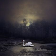 The swan and the moonlight by Neighya.deviantart.com on @deviantART