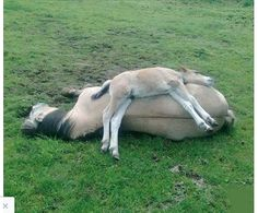 All mothers and babies share a very special bond, and these photos of mares and their foals are just too sweet. Baby Horses, Cute Horses, Horse Love, All The Pretty Horses, Beautiful Horses, Animals Beautiful, Cute Funny Animals, Cute Baby Animals, Animals And Pets