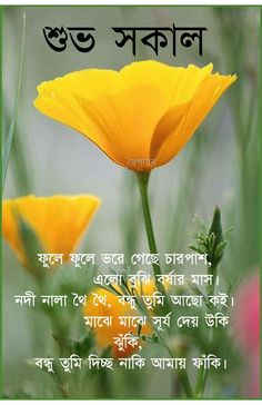 Good Morning Happy, Good Morning Greetings, Good Morning Quotes, Bangla Quotes, Gallery, Image, Roof Rack