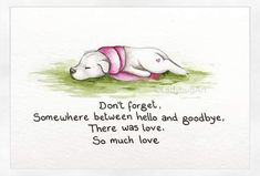 It's a sad day in our house. We had to say goodbye to our old man cat today. He was 15 years old, and we'd had him since he was around… Pet Loss Quotes, Dog Quotes, Animal Quotes, Puppy Love Quotes, Pet Loss Grief, Loss Of Dog, Dog Loss Poem, I Love Dogs, Cute Dogs