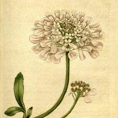 Nature decor Antique print Flower art Vintage by mapsandposters