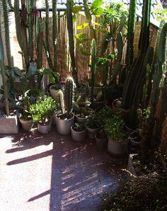 jardim e cactos