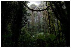 Costa Rica - Wildlife and Nature
