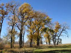 Fall on the South Dakota prairie.
