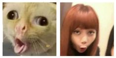 Read 57 from the story BLACKPINK MEMES by YoungBlink (𝐋𝐚𝐥𝐢𝐬𝐞́) with reads. Blackpink Memes, Funny Kpop Memes, Blackpink Photos, Funny Photos, Meme Faces, Funny Faces, K Pop, Tumbrl Girls, Blackpink Funny