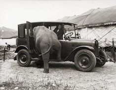 """Harry A. Atwell, """"Untitled (Elephant entering a taxicab),"""" 1924, from the exhibit """"Harry A. Atwell, Circus Photographer..."""