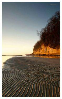 Calvert Cliffs  picture by JT Zalusky