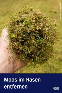 Remove moss in the lawn- Moos im Rasen entfernen Moss in the lawn can have many causes: shade, moisture or nutrient deficiency. Thanks Card, Lampe Led, Planting Seeds, Garden Styles, Lawn And Garden, Garden Inspiration, Gardening Tips, Flora, Succulents