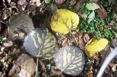 otoño en el sur Plants, Plant, Planets