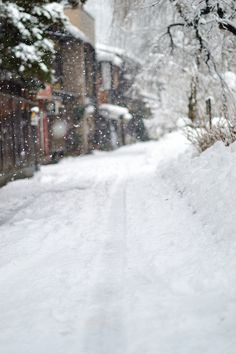 b7c369fcff0  winter  snow  snowfall  quiet Winter Day