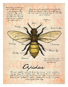 Bee Field Journal illustration by Opafaf on Etsy Arte Sketchbook, Bee Art, Creative Illustration, Illustration Children, Nature Journal, Art Graphique, Field Guide, Journal Pages, Journals