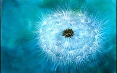 How To Paint A Dandelion: 10 Amazing and Easy Tutorials! Oil Painting Techniques, Simple Acrylic Paintings, Acrylic Painting Tutorials, Acrylic Painting Canvas, Art Techniques, Painting Tricks, Canvas Art, Dandelion Wallpaper, Dandelion Painting
