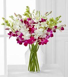 Orchid Illumination Bouquet