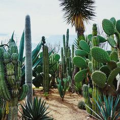 My #travel to #Mexico. #TurningEscape #wanderlust #travelalone #lblogger