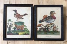 Pair of Bird Prints-the-lacquer-chest-IMG_2114_main_636311553491837823.jpg