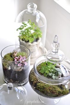 terrariums - made these for mother's day gifts with the kids a couple years ago and grandma's loved them!