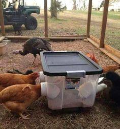 Chicken Coop On Wheels, Walk In Chicken Coop, Cheap Chicken Coops, Mobile Chicken Coop, Chicken Coop Pallets, Portable Chicken Coop, Chicken Feeders, Backyard Chicken Coops, Building A Chicken Coop