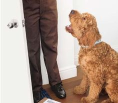 Decoding Your Dog's Behavior |  Real Simple Magazine