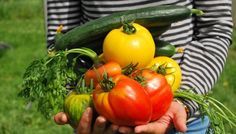 Choisir ses tomates : cultivez la diversité au potager !