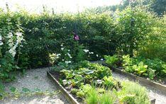 Plánujeme užitkovou zahradu - Magazinzahrada.cz Plants, Google, Plant, Planets