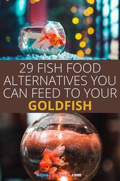 Goldfish Care, Goldfish Food, Goldfish Types, Comet Goldfish, Aquarium Fish Food, Goldfish Aquarium, Diy Aquarium, Freshwater Aquarium Plants, Freshwater Fish