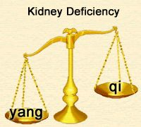 8 Best Kidney yang deficiency images in 2014 | Herbalism