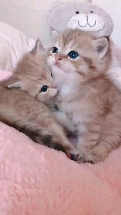 Cute Little Kittens, Cute Baby Dogs, Cute Cats And Kittens, Baby Cats, Cute Fluffy Kittens, Kittens Cutest Baby, Funny Cute Cats, Funny Cats And Dogs, Cute Funny Animals