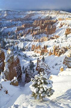 winter, Bryce Canyon National Park, Utah | Dave Welling, Fine Art America